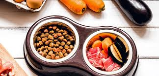paw leo puppy diet trendy dishes for doggy dining