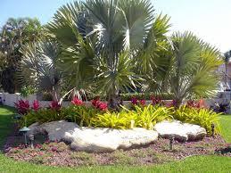 Tropical Landscape Design by 543 Best Florida Landscape Images On Pinterest Landscaping