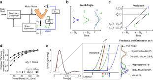 dynamic multisensory integration somatosensory speed trumps