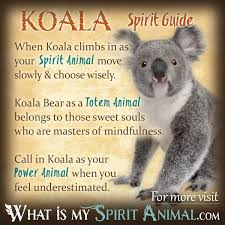 koala bear symbolism u0026 meaning spirit totem u0026 power animal