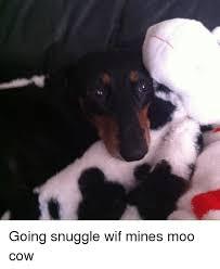 Moo Meme - going snuggle wif mines moo cow meme on astrologymemes com