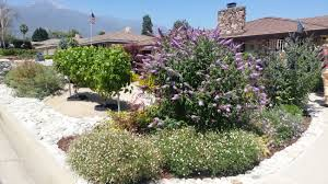 water savvy landscape contest cucamonga valley water district