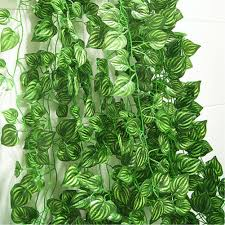 top 10 best plants for your indoor vertical garden