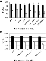 a novel protective function for cytokinin in the light stress