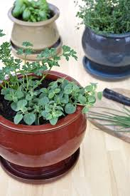 best 25 kitchen herb gardens ideas on pinterest patio herb