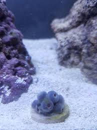 Floating Aquascape Reef2reef Saltwater And Reef Aquarium Forum - mike u0027s 5 gallon pico 1st sw reef reef2reef saltwater and reef
