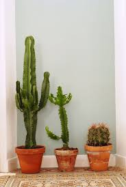 best 25 deco cactus ideas on pinterest déco cactus cactus
