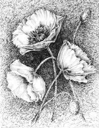 58 best pen and ink floral images on pinterest drawing flowers