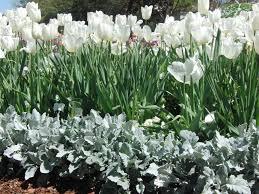 Botanical Gardens Dallas by Dallas Blooms At The Dallas Arboretum And Botanical Gardens
