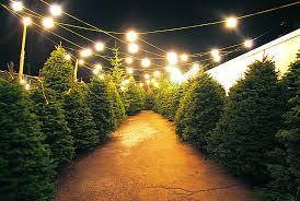 christmas lights sizes comparison christmas tree lot league91 com