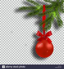 christmas card green branches of a christmas tree with red balls