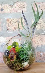 77 best air plants images on pinterest gardening indoor plants