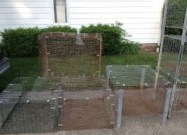 Rabbit Hutch Plans For Meat Rabbits Raising Meat Rabbits Our Setup So Far Thrifty By Nature