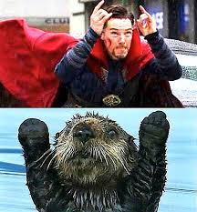 Benedict Cumberbatch Otter Meme - dr strange otter meme doctor strange pinterest otter meme