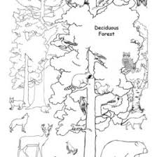 coloring pages animals in the forest archives mente beta most