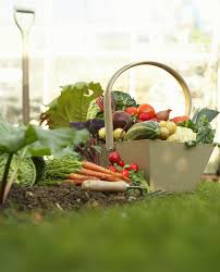 planting a vegetable garden for beginners how when and where the