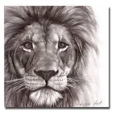drawn sketch lion face pencil and in color drawn sketch lion face