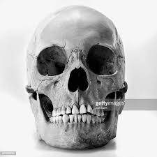 human skull stock photos and pictures getty images