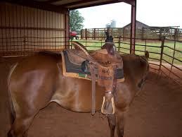 jackson ranch horse training jackson ranch livestock llc