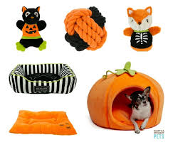 Martha Stewart Dog Halloween Costumes Martha Stewart Pets Halloween Collection Golden Woofs