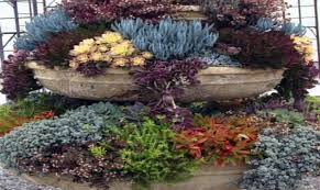Succulent Gardens Ideas Succulent Garden Ideas Container In Flossy Succulent Ideas