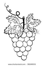 cartoon grape vines stock images royalty free images u0026 vectors