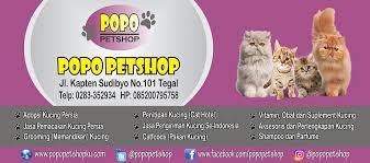 Sho Kucing Anti Jamur petshop