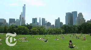 36 hours in central park new york the new york times
