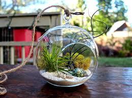 hanging terrarium bubble glass air plant containers pots for