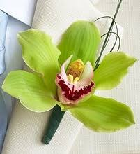 orchid boutonniere cymbidium orchid boutonniere prom boutonnieres homecoming