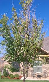 diagnosis why does my tree splitting bark sap and