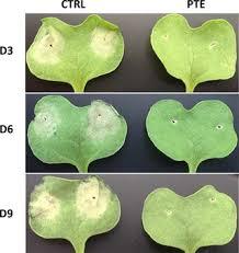 Plant Disease Journal - plos one plant disease resistance