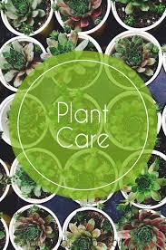caring for indoor hanging plants u2013 flowerups