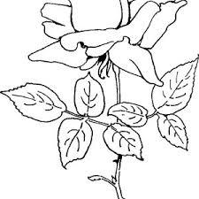 rose flower bouquet coloring page color luna