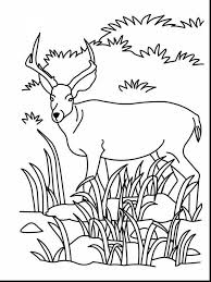 terrific baby animal coloring pages girls with realistic animal
