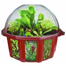terrarium kits fast track your start with terrariums