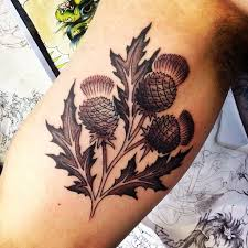 Scottish Tattoos Ideas 95 Best Tattoe Images On Pinterest Thistles Scottish Tattoos