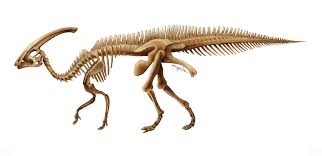 dinosaur mary p williams scientific illustration page 4