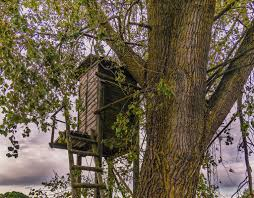 safety starts with the tree stand farm and dairy