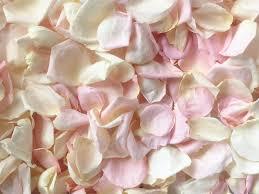 real petals petals ivory blush blend real freeze dried petals