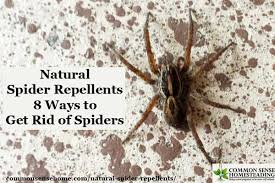 Are Spiders Attracted To Light Natural Spider Repellents 8 Ways To Get Rid Of Spiders