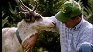 thanksgiving videos for children youtube video reindeer 101 for children martha stewart