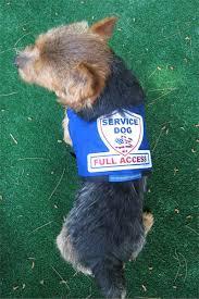 premium small service dog vest