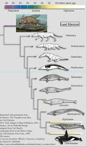 whale evolution data table answer key 52 best morphology and taxonomy images on pinterest cards charts