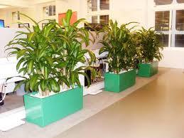 planter boxes u2013 perfection plant hire