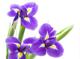 Names And Images Of Flowers - flower names flower meanings and inspiration inspiring flowers