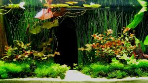 Tropical Fish Home Decor Fish Tank Ideas Feel Free To Use And Share These Tropical