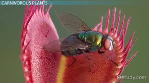 tropical rainforest animal adaptations video u0026 lesson transcript
