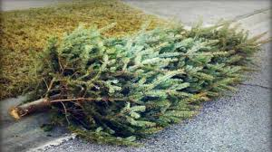 elkhart announces christmas tree disposal dates locations