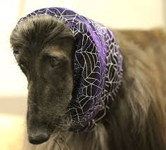 afghan hound grooming styles doggy styles 15 artfully groomed pup u0027dos care your pet dog or